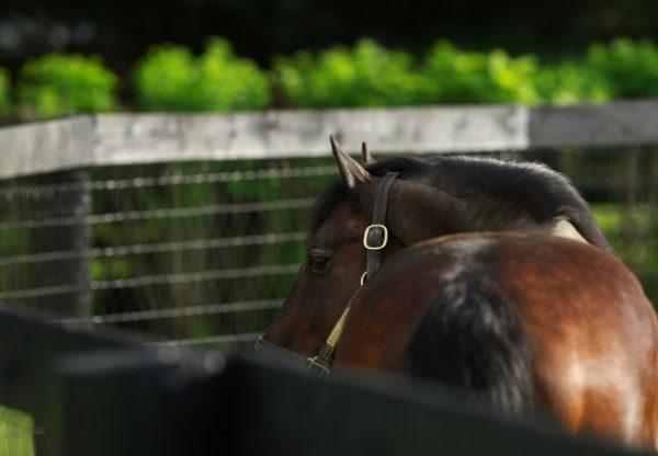 Fusaichi Pegasus paddock shot