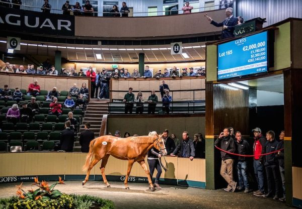 Galileo ex Aleagueoftheirown selling for €2m at Goffs Orby Sale