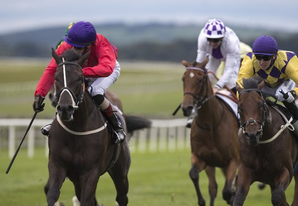 Hammersmith (No Nay Never) winning a nursery at the Curragh