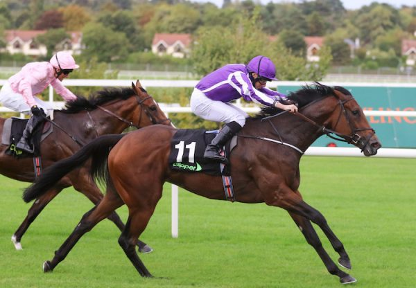 I Can Fly (Fastnet Rock) winning the G2 Boomerang Stakes at Leopardstown