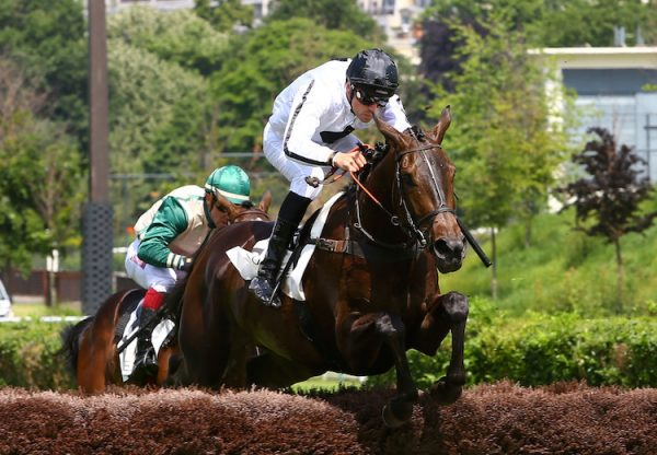 Lady Ardilaun (Soldier Of Fortune) winning the Prix Bois Rouaud at Auteuil