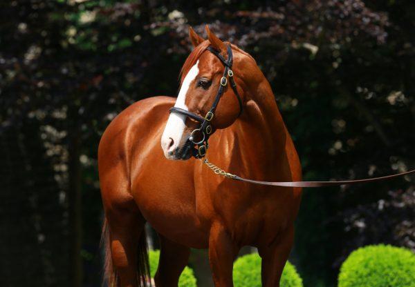 Easifar (Pride Of Dubai) winning at Randwick