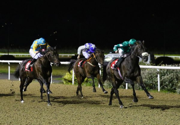 No Needs Never (No Nay Never) winning the Listed Star Appeal Stakes at Dundalk