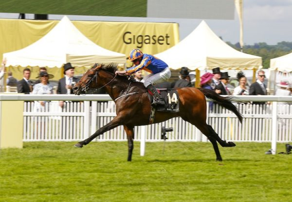 Order Of St George (Galileo) winning the G1 Ascot Gold Cup at Royal Ascot
