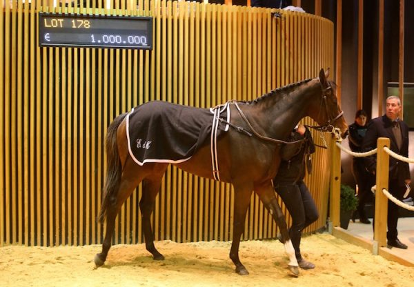 Parvaneh (Holy Roman Emperor) selling for €1 million at the Arqana December Sale
