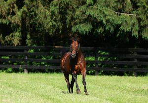 Zoffany ex Centaure yearling colt conformation shot