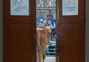 Choisir leaving the stallion barn