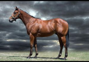 American Pharoah ex World Map colt selling for $255,000 at the MM National Weanling Sale
