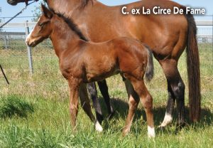 Calyx La Circe De Fame C Carousel 1920X1331