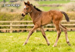 Cex On Ice Ten Sovereigns Foals 1920X1331