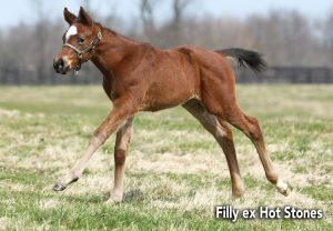 Classic Filly Ex Hot Stones