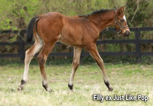 Classic Filly Ex Just Like Pop