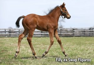 Classic Filly Ex Swap Fliparoo
