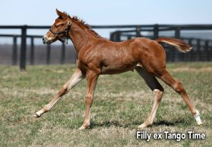 Classic Filly Ex Tango Time