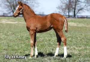 Cupid Filly Ex Kinsey2