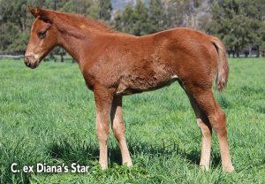 Diana'S Star 1920X1331