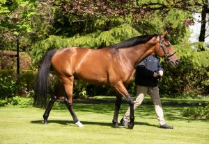 Highland Reel walking