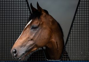 Highland Reel Head Shot