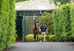 Highland Reel breeding shed