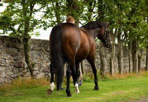 Collooney (Yeats) winning a bumper at Huntingdon