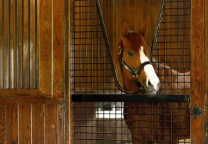 Justify At Stables 23