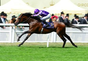 Flotus (Starspangledbanner) Lands The Listed Ripon Champion Two Year Old Trophy