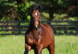 American Pharoah ex Gloat yearling colt selling for $310,000