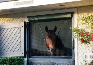 Magna Grecia Stallion Yard Dec 9Th 102