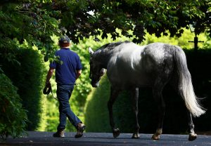 Mastercraftsman Walking
