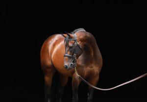 Washington DC (Zoffany) winning the Listed Woodlands Stakes at Navan