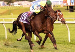 Aramax (Maxios) winning a novice hurdle at Naas