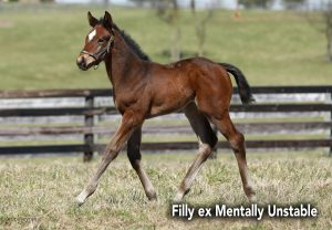 Pj Filly Ex Mentally Unstable