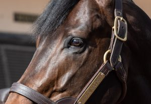 Sioux Nation Stallion Yard 2