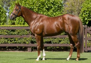 Tara (Mastercraftsman) Wins At Clairefontaine