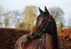 Ten Sovereigns Stallion Yard 118
