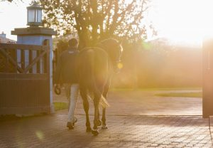 Ten Sovereigns Stallion Yard 138