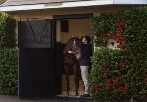 Ten Sovereigns Stallion Yard 140