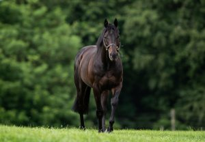 Amma Grace (Galileo) Wins The Listed Trigo Stakes at Leopardstown