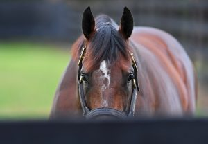 Yes Yes Yes Coolmore 22