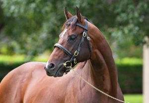 Yes Yes Yes Coolmore 40