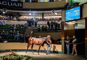 Know The Score (Flemensfirth) selling for £380,000 at Cheltenham
